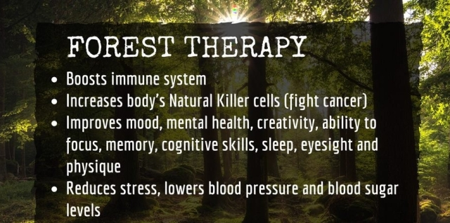 Forest bath therapy benefits