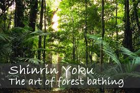 Forest Bath Therapy